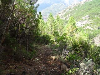 Dans la redescente du chemin de Paliri : le chemin après les travaux