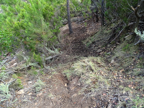 Le chemin à la sortie du sous-bois après la face W de Punta Russa