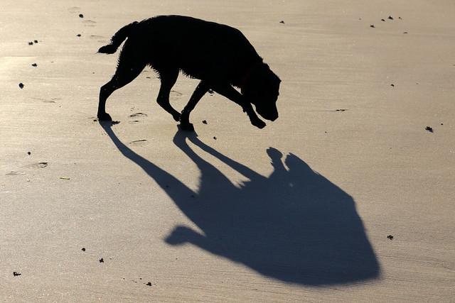 Meg's shadow 06-2019