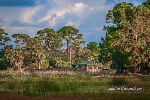 landscape scene peaceful bpardwalk marsh water trees woods forest pines pinetree observationdeck clouds cloudy sky bluesky weather sunny nature mothernature windingwaters naturalarea windingwatersnaturalarea westpalmbeach florida usapalmbeachcounty
