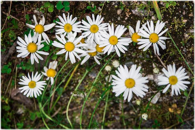 2019-07-20 - Revonkyla, Finland, Butoh expedition DSC_3486-Edit