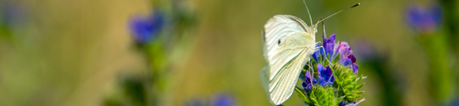 Mariposas y pájaros del paraíso, Martinu