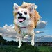 Tuppence in the Sky with Woofs!