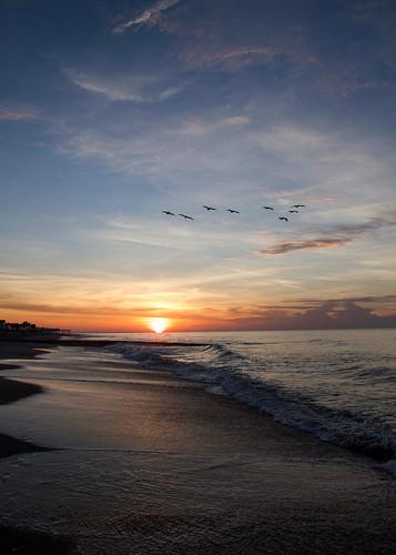 beach sun sunrise water ocean bird birds pelican wave waves sand pier clouds