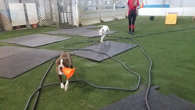 7-21-19 Obstacle Course! :)