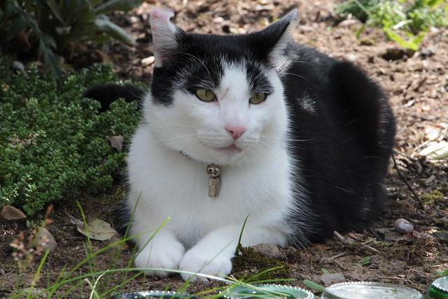 Theo observiert mich bei der Gartenarbeit