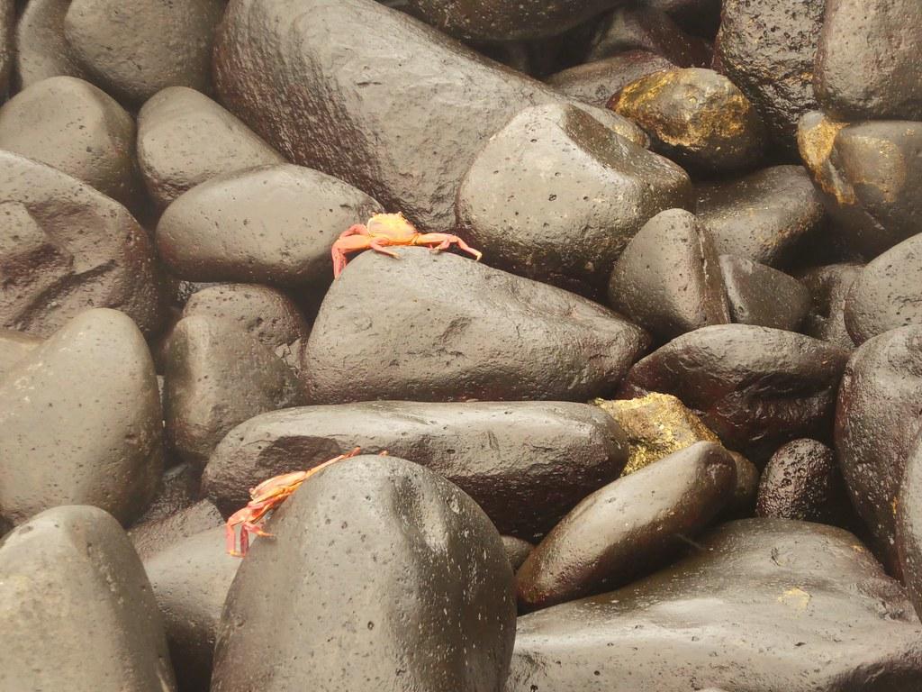 Galapagos Islands Ecuador April 2019