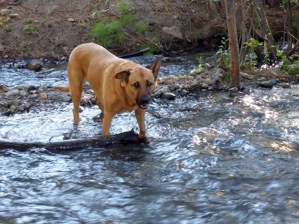 Bella the riverdog