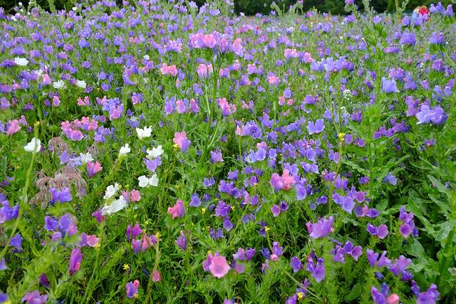 Preston Park Meadow