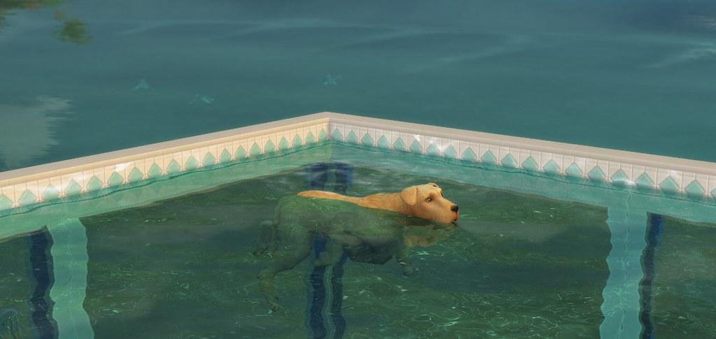 Perro nadando en Los Sims 4