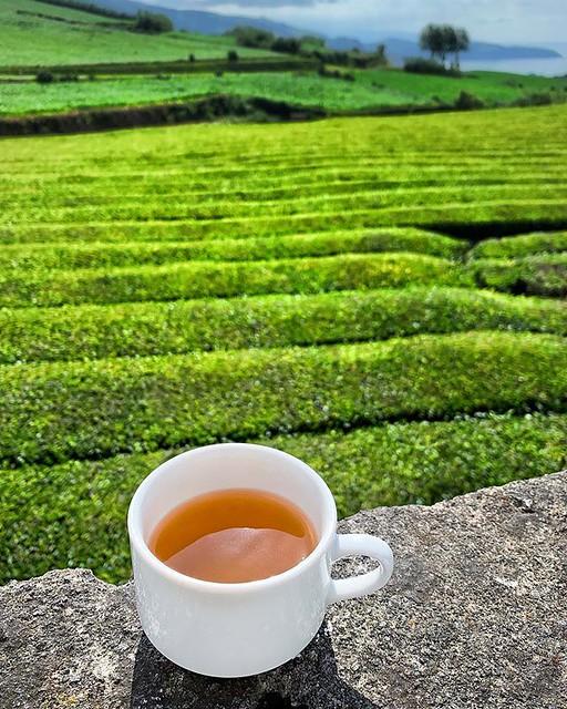 Just my cuppa tea! ⛰ 🍃 ☕️  #chagorreana #azores #tea #saomiguel #teaplantation #plantation #delicious #portugal