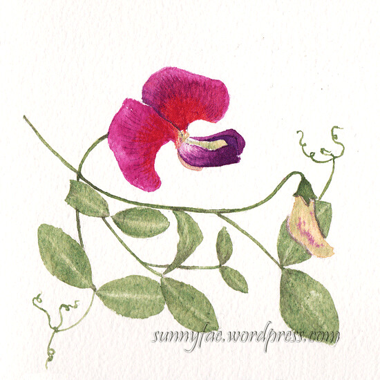 wild sweet pea flower watercolour