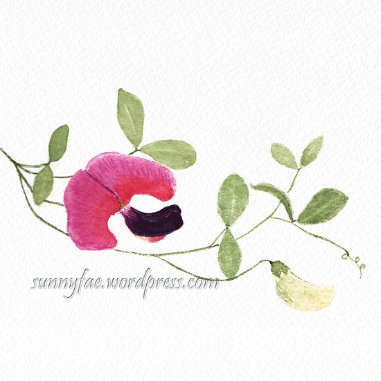 wild sweet pea watercolour