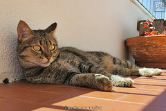 Pedro Nogueira Photography posted a photo:More photos of my cats in this Flickr album.