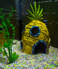Fish Tank by mister.duffy