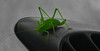 Grasshopper by mister.duffy
