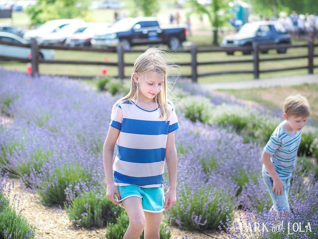 Lavender Festival