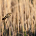 Bird on Stalk