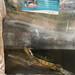 Mazurte Turtle Sanctuary (11 of 12).jpg