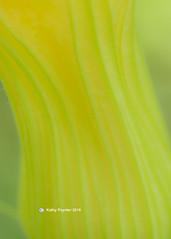 Shamrock Farm - Zuchinni Flower 9956