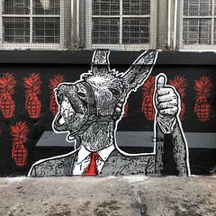 Animal Político - Burro