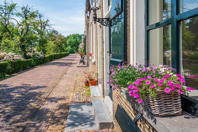 Flowering plants in the windowsills of historic houses