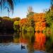Autumn Ducks India Lake [1920x1080]