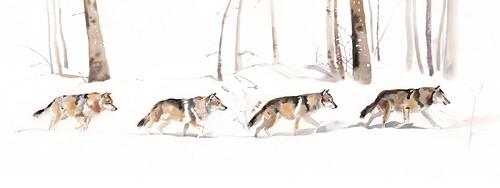 Loup-balade
