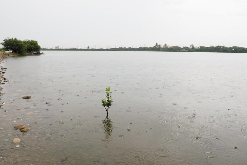 下雨的永安濕地,沉靜中傳來鳥聲和周邊汽車人為噪音。攝影:李育琴
