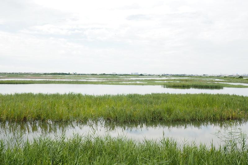 廣大的茄萣濕地每年冬季是上萬候鳥的家。攝影:李育琴