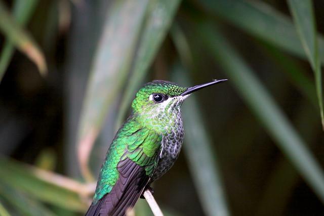 hummingbird (rename 2)