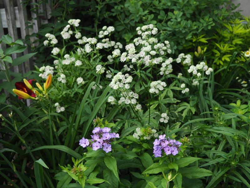 Récolte des semences, plante par plante - Page 5 48346232092_da75602a34_o