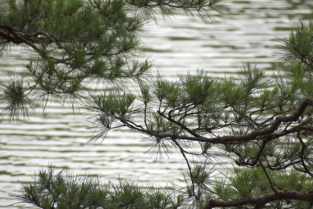 Pine needles against water waves