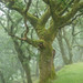 iannclem posted a photo:Misty Cadover Woods