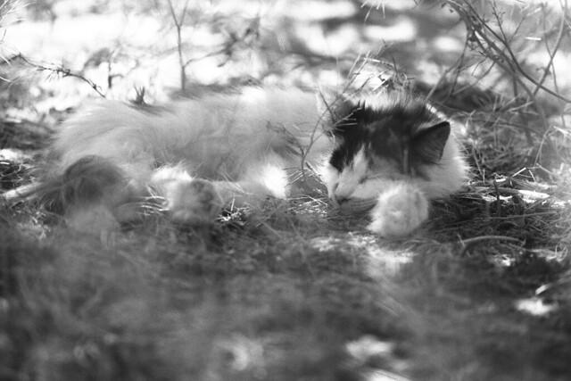 A Secluded Sleep