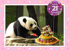Happy Bearday 🎂 Mei Xiang