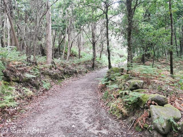 Camino Portugues Tag 11