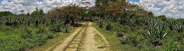 MEXIKO, Yucatán , Hacienda Sotuta de Peón, Sisalplantage,  19114/11775