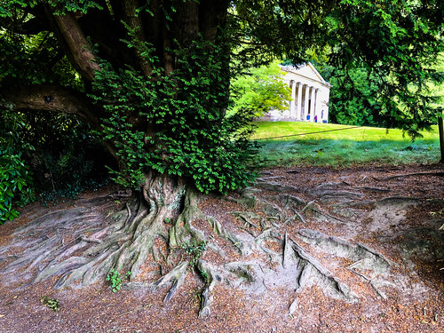 July 7th 2019 - Stourhead roots | by Spatho