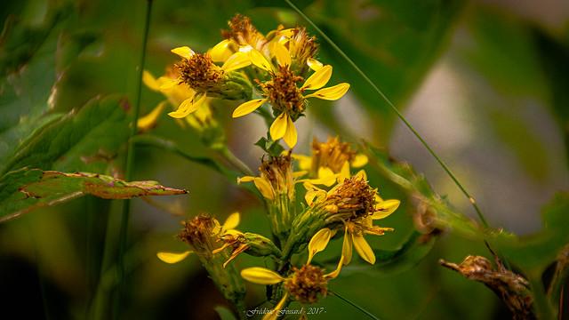 Flower Romping