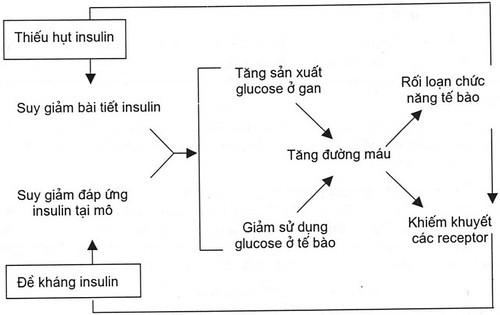 de-khang-insulin-gay-benh-tieu-duong-tuyp-2