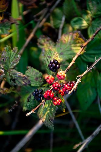 ballardnaturecenter effinghamcounty illinois places altamont berries unitedstatesofamerica