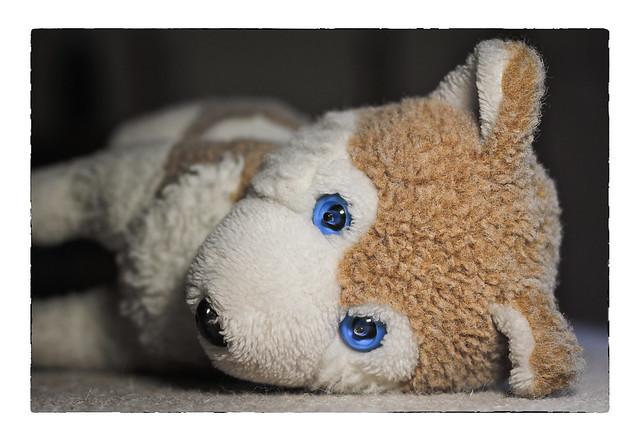 müder Wolfi - tired Wolfi - Wolfi fatigué