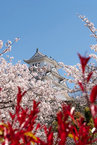 Japan, five popular places to visit