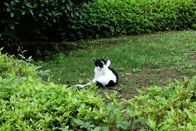 Today's Cat@2019-07-23
