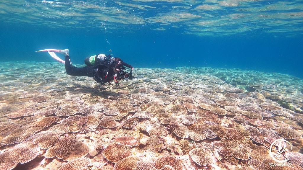 珊瑚に当たらないようにぎりぎり泳ぐダイバー