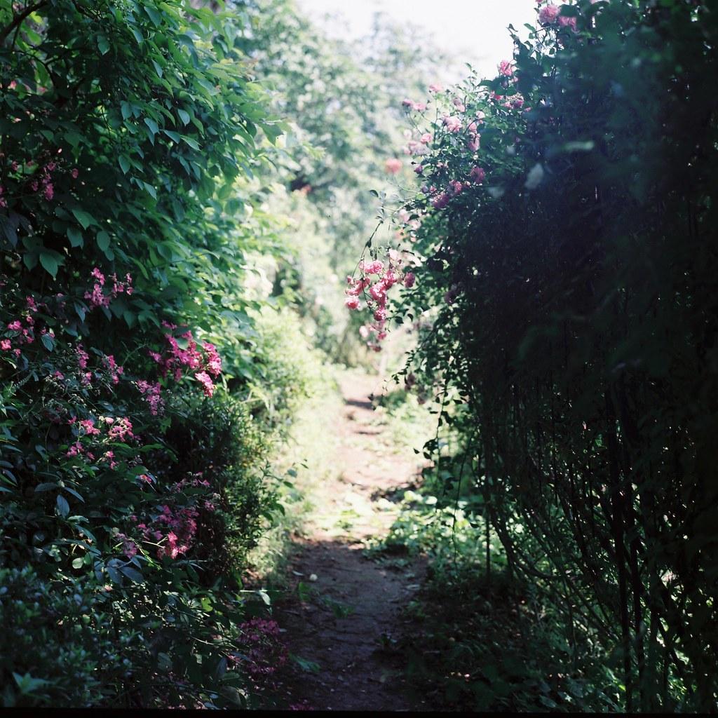 Sakano rose garden