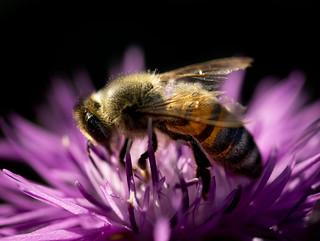 Bee Digging Deep 1