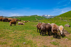 Scenery on the slopes of Mount Aragats, Armenia