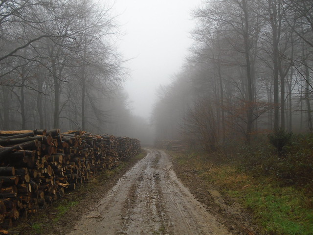 A Foggy wet and wintry walk through the woodland